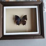 Бабочка, фото №2