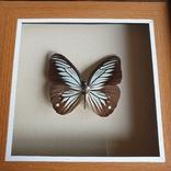 Бабочка 3, фото №3
