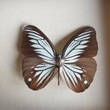 Бабочка 3, фото №4