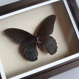 Бабочка 4, фото №3