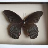 Бабочка 4, фото №4