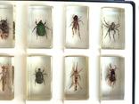 Жуки в стекле, настоящие Насекомые и их знакомые, коллекция 18 шт., фото №9
