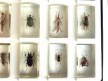 Жуки в стекле, настоящие Насекомые и их знакомые, коллекция 18 шт., фото №11