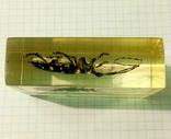 Жук-усач в параллелепипеде из эпоксидной смолы., фото №4