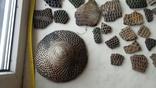 Керамика Катакомбной культуры, фото №6