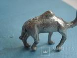 Верблюд., фото №6