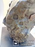 Голова лошади бронза мрамор Европа 4 кг, фото №7