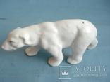 Полярный медведь., фото №2