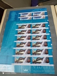 Лот марокРоссии за 2009г с блоками и малыми листами, фото №8