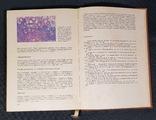Атлас анатомо-эндокринологических половых аномалий развития, фото №11