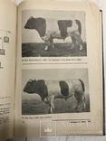 1937 Элитный крупный рогатый скот, фото №2