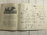 1937 Элитный крупный рогатый скот, фото №7