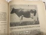 1937 Элитный крупный рогатый скот, фото №9