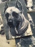 Открытки. Собаки чемпионы, фото №4