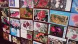 60 старых открыток с цветами + бонус, фото №5