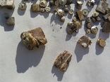 Серебро контакты ( магнит) 37,75 грамма, фото №3