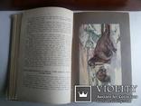 Детская энциклопедия 1913 т 3 изд т-ва Сытина, фото №7