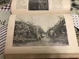 Промышленное плодоводство 1898 год, фото №2