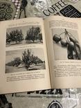 Промышленное плодоводство 1898 год, фото №9