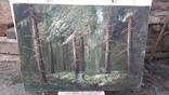 Пищанский лес., фото №3