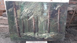 Пищанский лес., фото №4