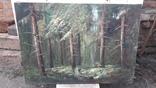Пищанский лес., фото №6