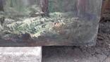 Пищанский лес., фото №8
