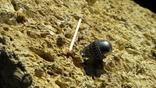 Кулон, подвеска в форме яйца, фото №4