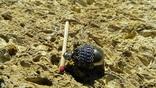 Кулон, подвеска в форме яйца, фото №5