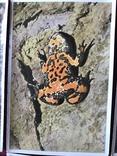 Германские открытки послевоенного периода Флора и Фауна, фото №5