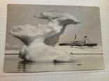 Фото:Ледокол:Адмирал Макаров и ледник., фото №2
