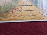 Старинная рисованная открытка, фото №6