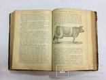 Лечебник домашних животных 1896 г, фото №8