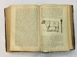 Лечебник домашних животных 1896 г, фото №11