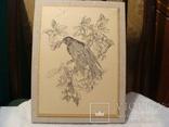 Графика - птица, фото №2