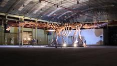 Больше, чем «Боинг»: что нашли палеонтологи на одном из ранчо Патагонии?