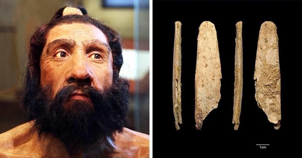 Лощило или гладило: инструмент неандертальцев, который используется в наши дни
