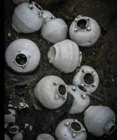 Фарфор, монеты и серебряные слитки: что было обнаружено на затонувшем китайском корабле?