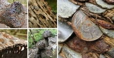 Шотландский лес, в котором «растут» монеты