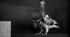 Голубиная съемка: фото начала 20 века, сделанные с высоты птичьего полета