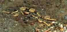 Оружие и украшение: под Полтавой обнаружен скифский клад