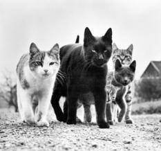 Уолтер Чандоха – легендарный фотограф котов