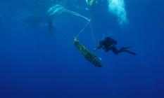 Морская находка: археологи обнаружили уникальный якорь