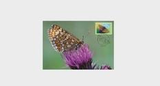 Бабочка шашечница авриния теперь на марке номиналом 0,9 евро