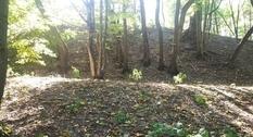 В Житомирской области найдены следы древнего города времен Киевской Руси
