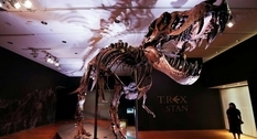 At auction Christie's put up the skeleton of a 12-meter dinosaur