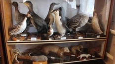 Birds, animals, butterflies: zoological collection of a Kharkov pensioner
