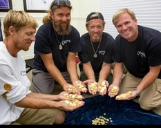 For more than 300 years, these golden coins have lain in the Atlantic Ocean