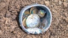 Gold coins of the 11th century were found in a hole that was once intended for the removal of groundwater
