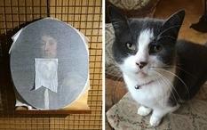 Не прошла проверку кошкой: домашнее животное искусствоведа испортило картину XVII века